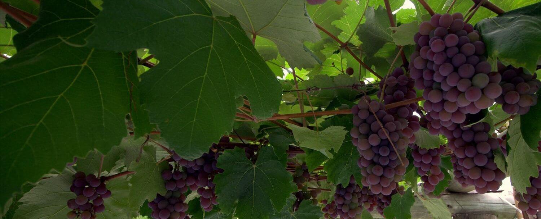 Western New York Wineries