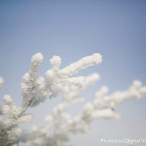 mayville winter festival